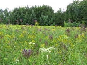 Designed Meadows