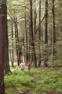 Hiking in the Hemlock Ravine