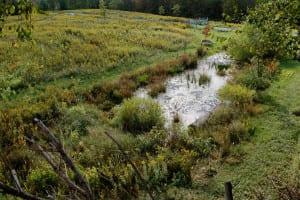 shrinking ephemeral pond