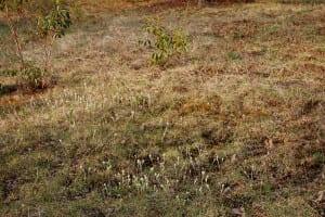 Kalmia latifolia and Antennaria sp.