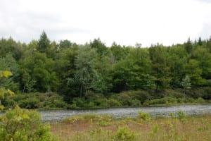 Preserve - Freshwater pond