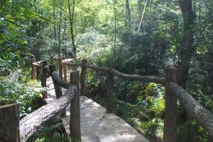 The bog trail.