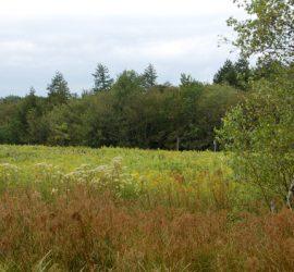 Natural Meadows