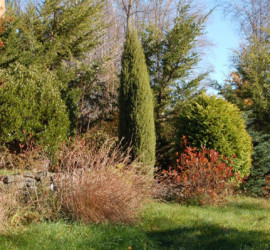 Dwarf Conifer Display Gardens