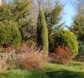 Dwarf Conifer Display Gardens