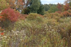 shrubland
