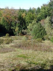Mountain Laurel -- October