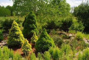 Opus Pinus