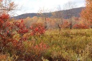 Successional shrubland