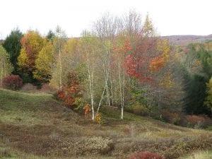 Northern Hardwoods