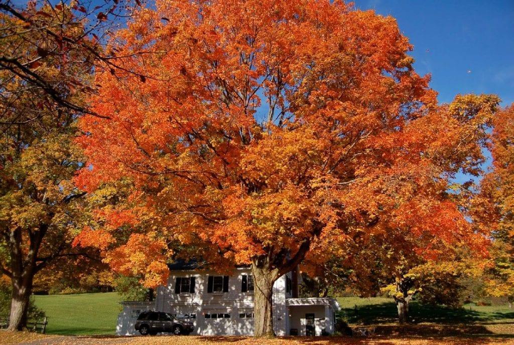 A true New England-like scene, shot in Hamilton, NY.