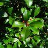 Winter Gardening: Native Shrubs and Trees for Winter Interest